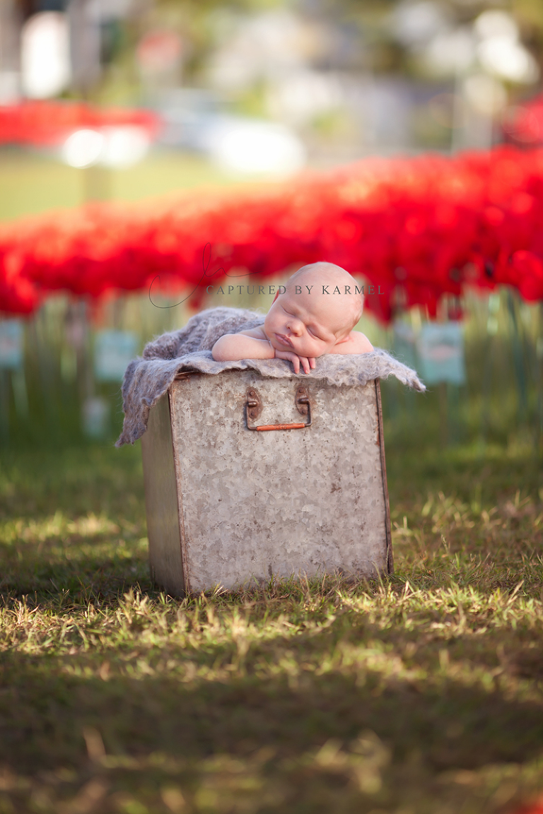 anzac poppies gosford newborn baby photography