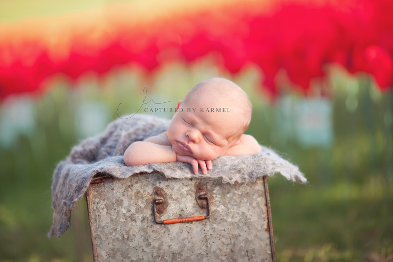 newborn photography anzac gosford poppies