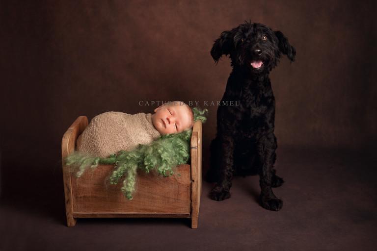 newborn photography dog