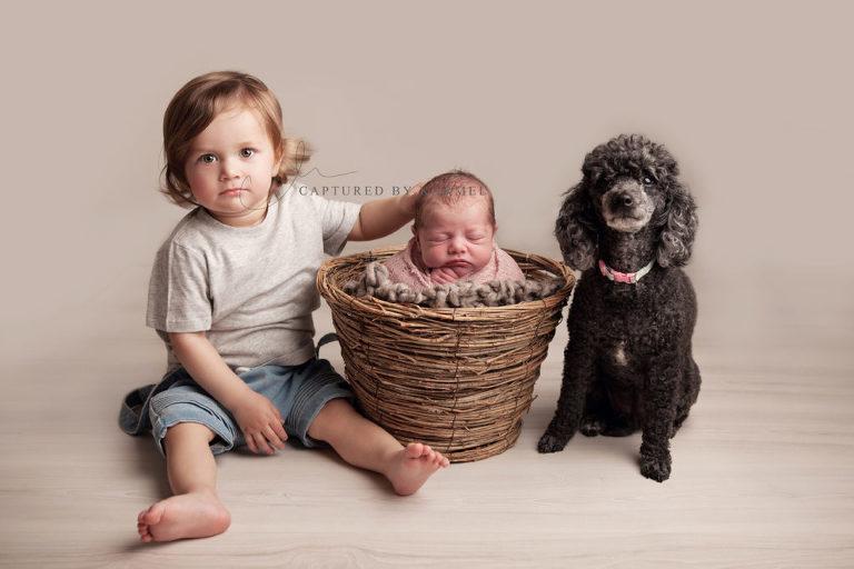 newborn photo sibling dog portrait in basket